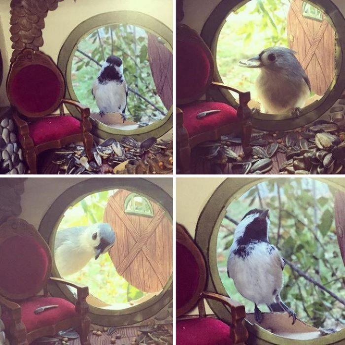 Aves comiendo adentro de la casa