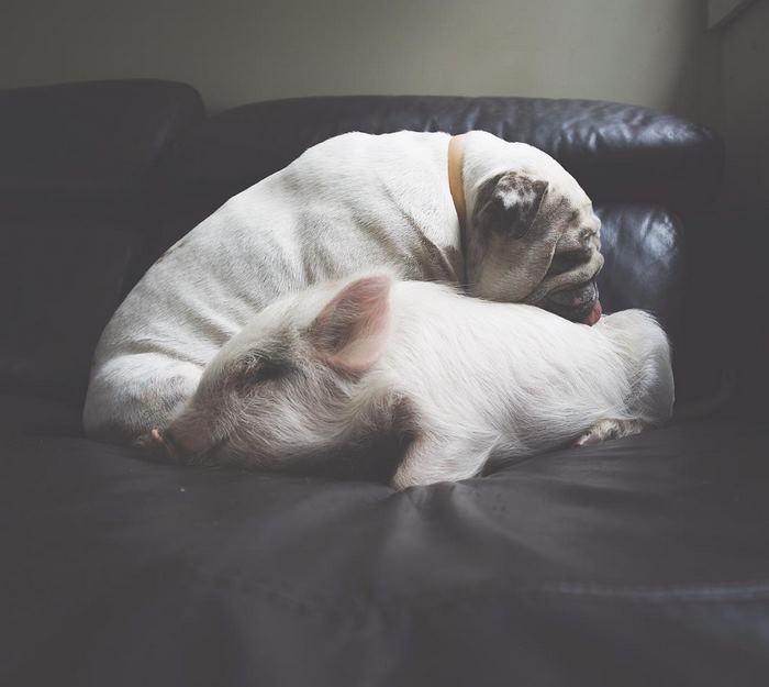 Lola y Olive durmiendo juntas.
