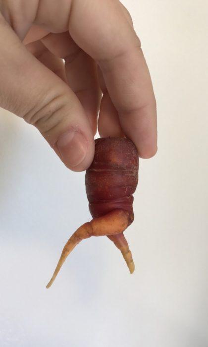 zanahoria con patas