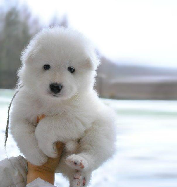 Cachorro en la mano blanco