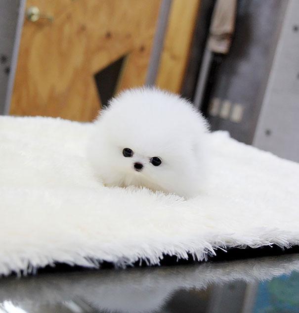 Cachorro blanco en alfombra blanca