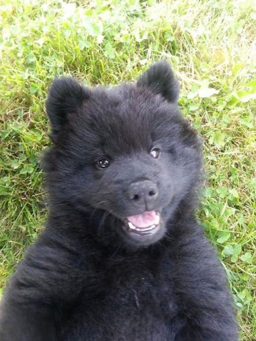 Cachorro tierno -cachorro negro
