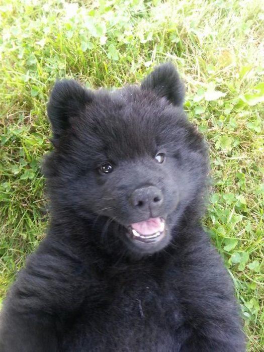 Cachorro negro en el pasto