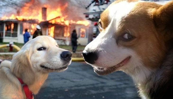 Batalla de Photoshop Corgi - Dos perros y casa en fuego al fondo
