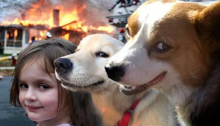 Batalla de Photoshop Corgi - niña y perros casa en fuego