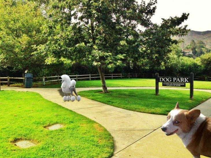 Batalla de Photoshop Corgi - siguiendo a poodle