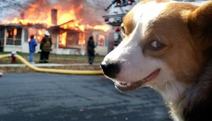 Batalla de Photoshop Corgi - Batalla de Photoshop Corgi - Casa en fuego al fondo