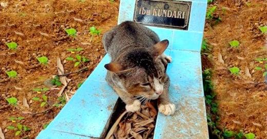 cover-gato-tumba