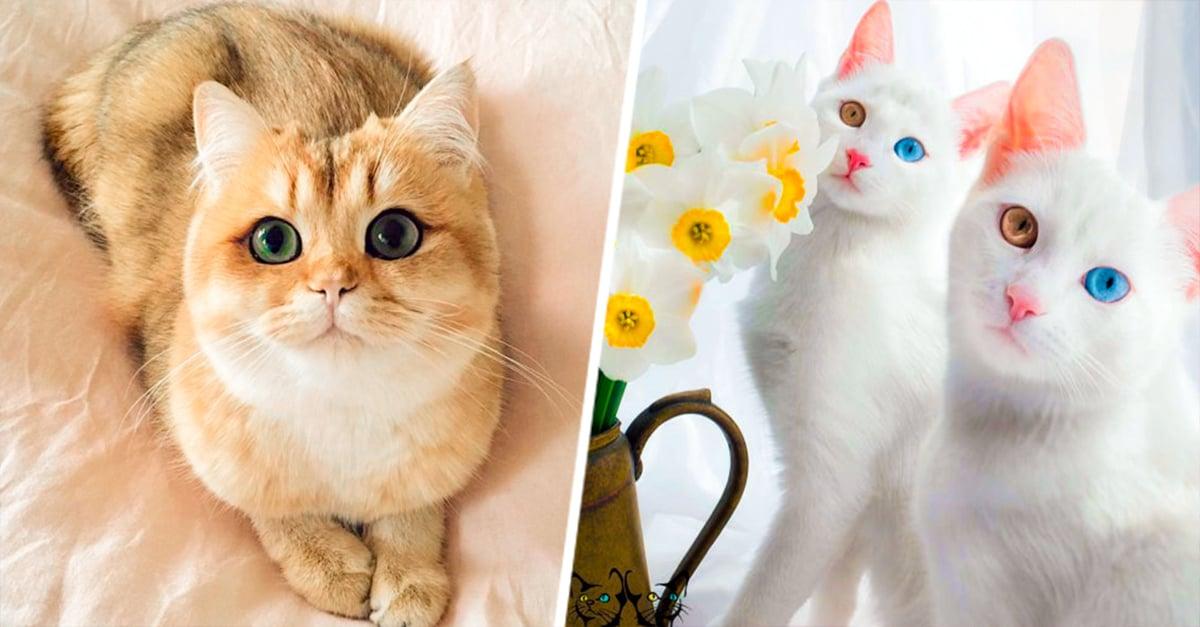 19 Gatos Más Bellos De Todo El Mundo