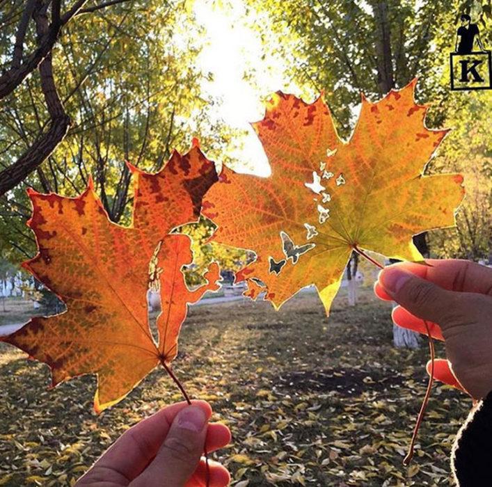 Dibujos en hojas de otoño