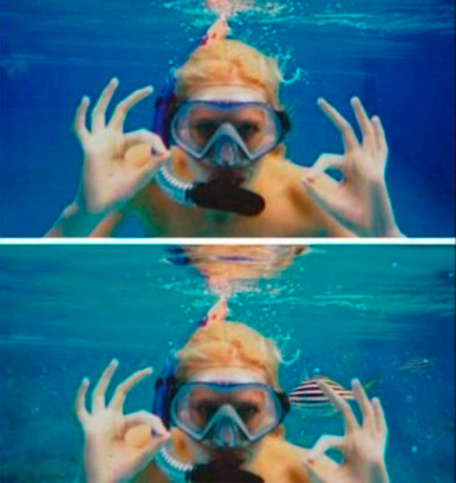 Zilla nadando con peces gracias al photoshop