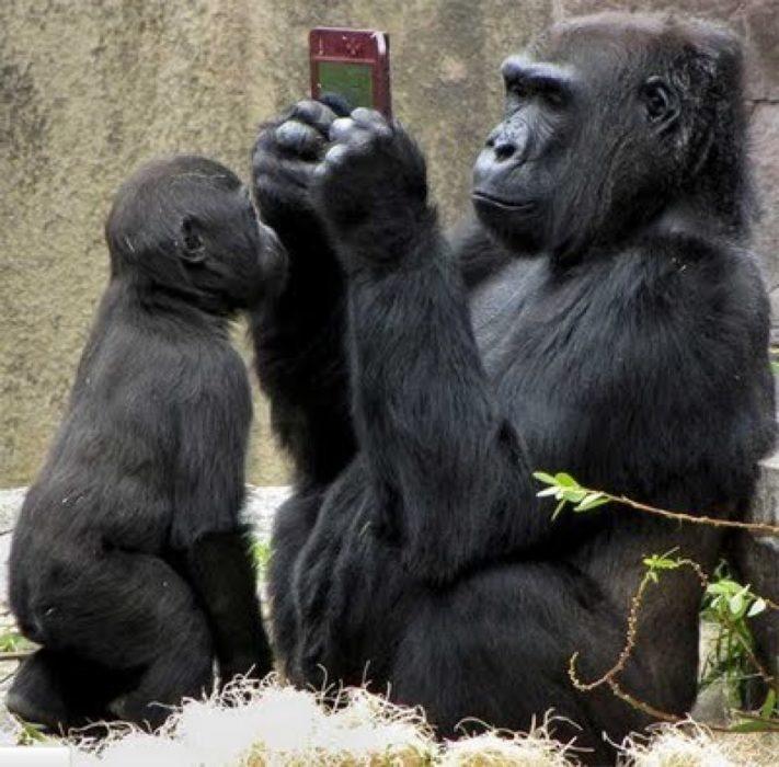 Gorila con celular