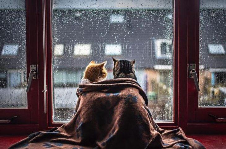 Dos gatos en la ventana