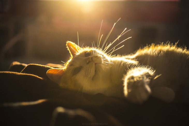 Una gatita muy tierna recostada