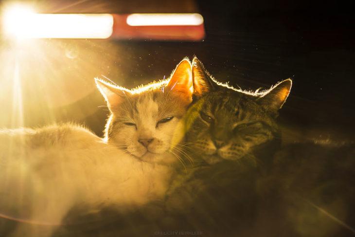 Dos gatos a punto de dormir