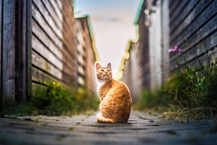 Gato de espaldas en un callejón