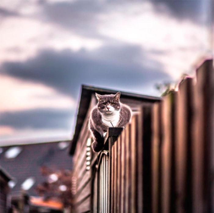Gato caminando sobre el barandal