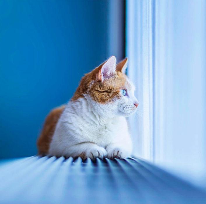 Un gatp blanco y café mirando por la ventana