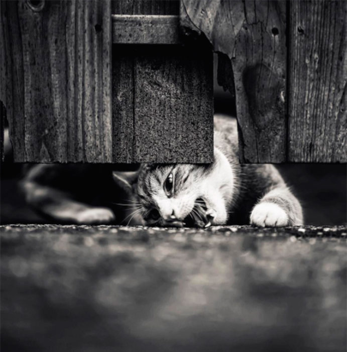 Gato bajo la puerta