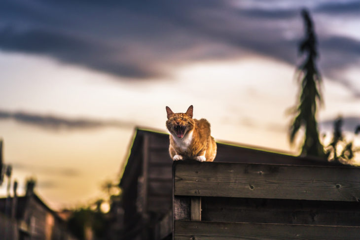 Un gato en la azotea