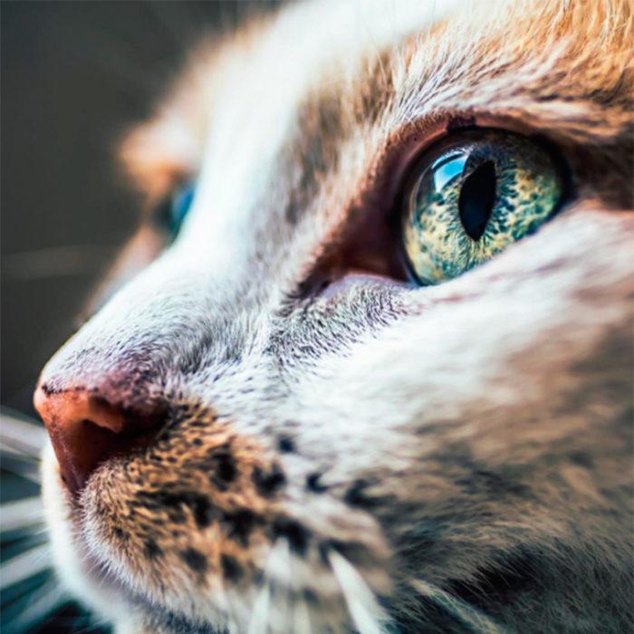 Un gato visto desde cerca