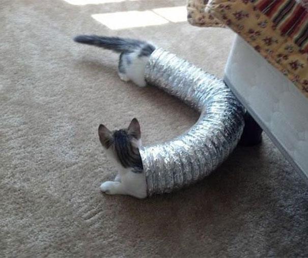 Foto de gato en un ducto