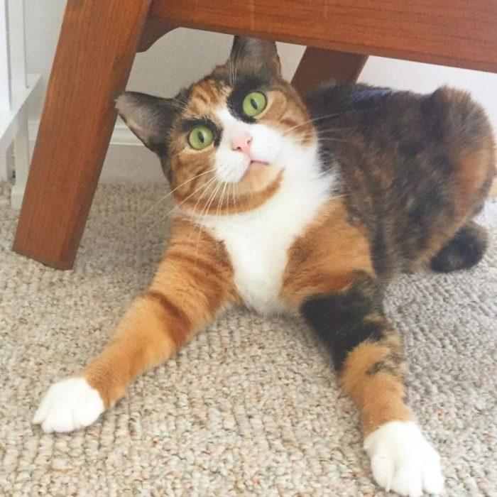 Una gata cejona que no quiere que pases