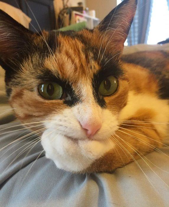 Parece que esta gatita está pensativa