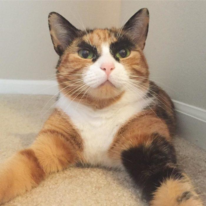 Una gatita tomándose una selfie