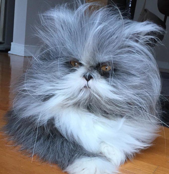 Gato-perro