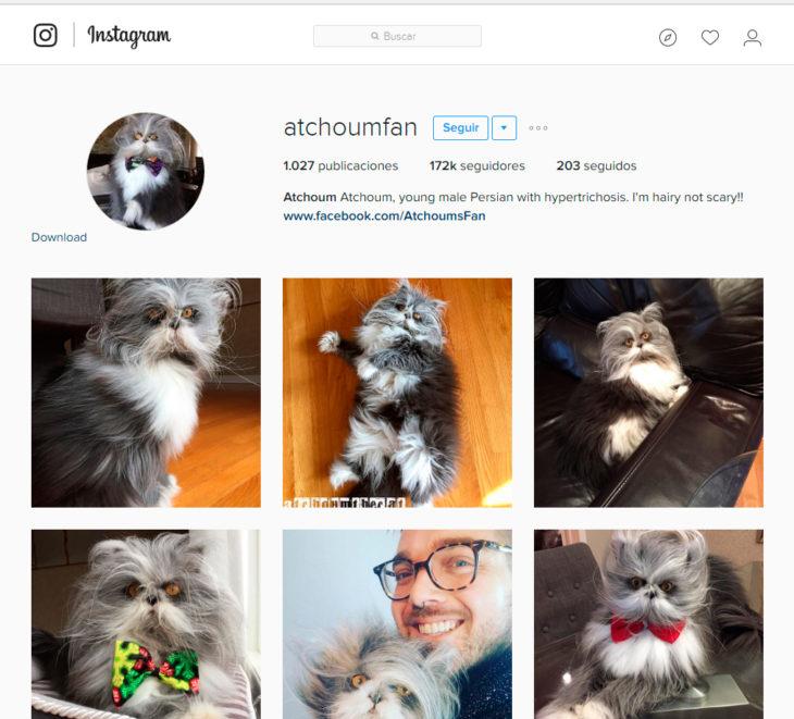 Instagram del gato-perro