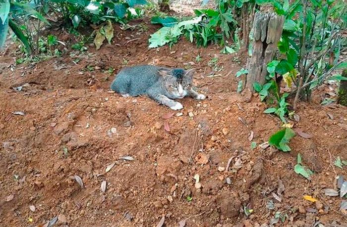 Un gato sobre la tumba de su dueño