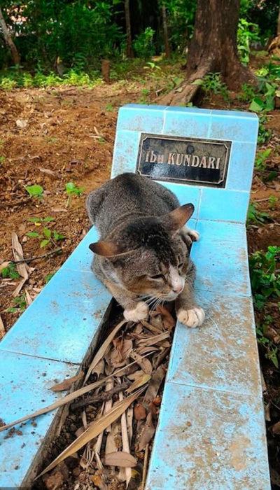 Gato en la tumba de su dueño