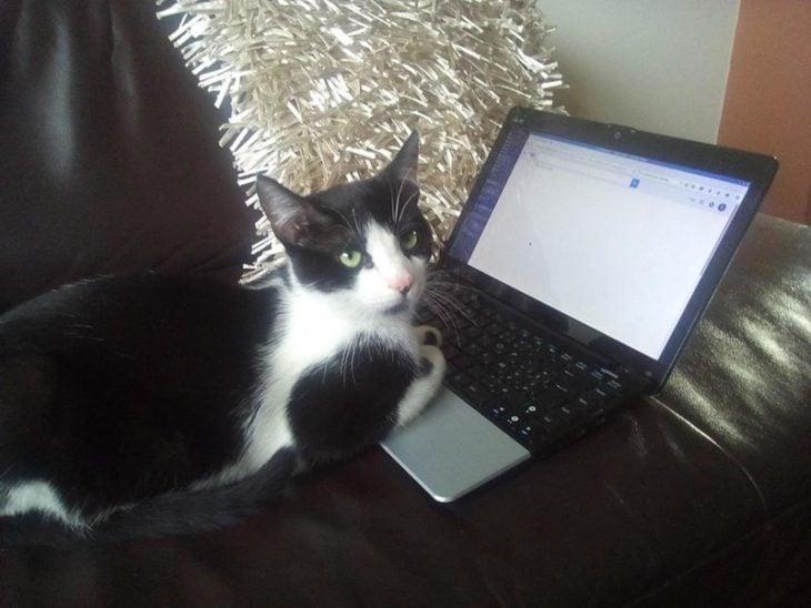 Gato trabajando en la computadora