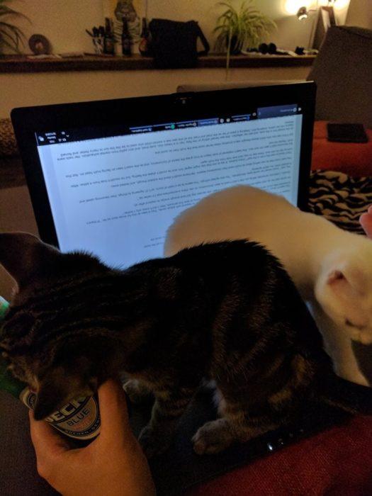 Gatos jugando en la laptop de su dueño