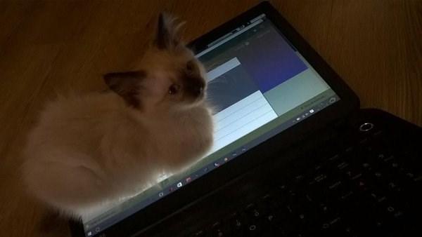 Gatito café acostado sobre la pantalla de una computadora