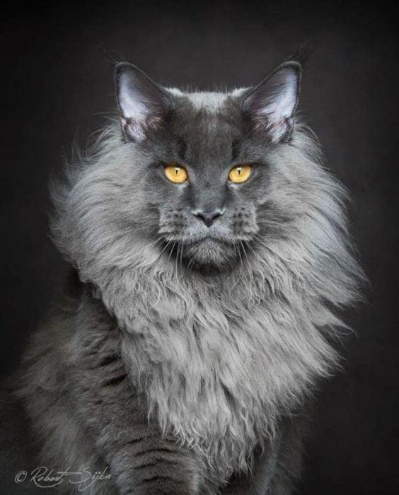 gatoleón