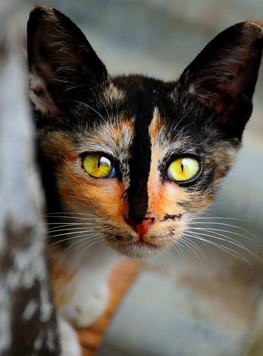 ojos de víbora