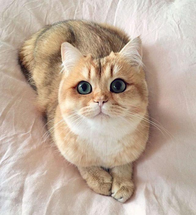 gato tierno y dulce