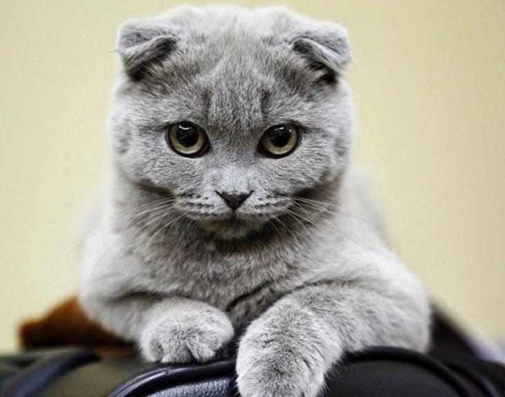 gatito inocente