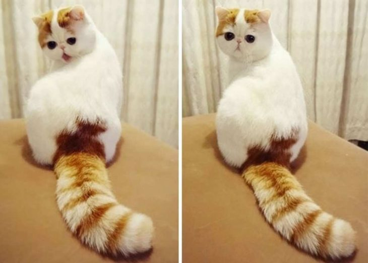 gatito pug