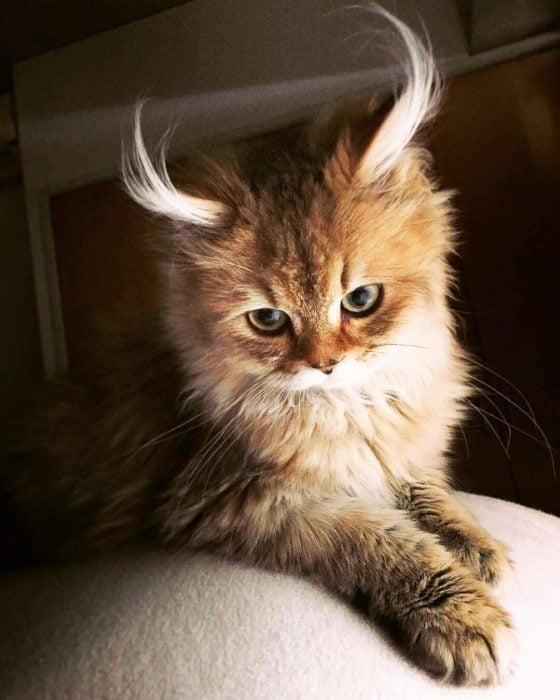 gato con cuernos