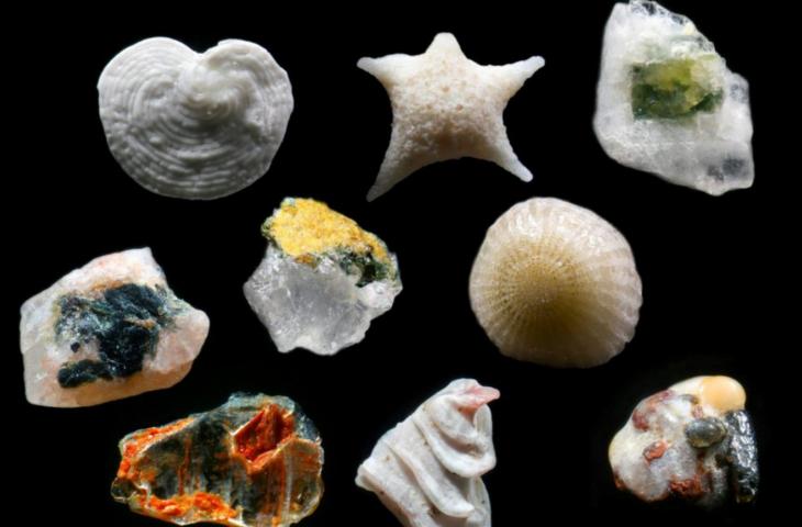 Granos de arena con forma de estrella y concha