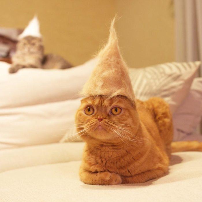 Gatos con sombreros de cono