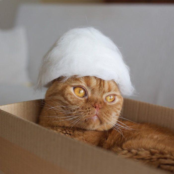 Gato con un sombrero elegante de pelo blanco
