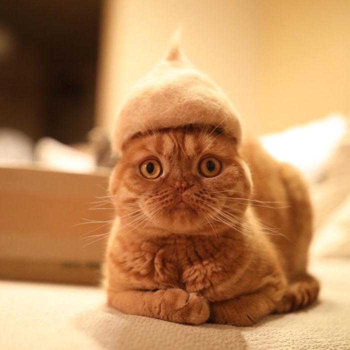 Gato con cara de asustado y trae un gorro de pelo suyo