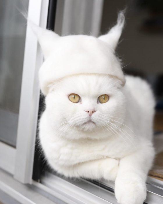 Gato blanco con un sombrero con orejas de gato