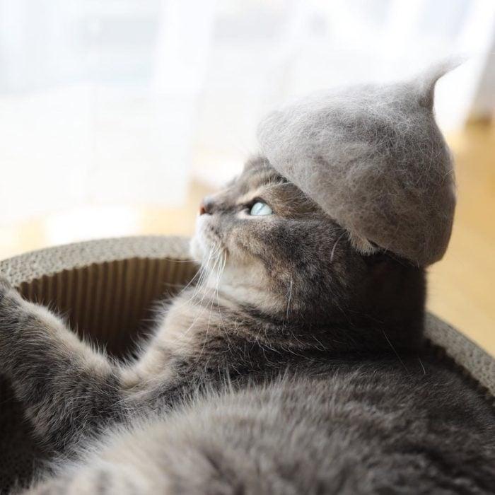 Gato con un sombrero de su pelo