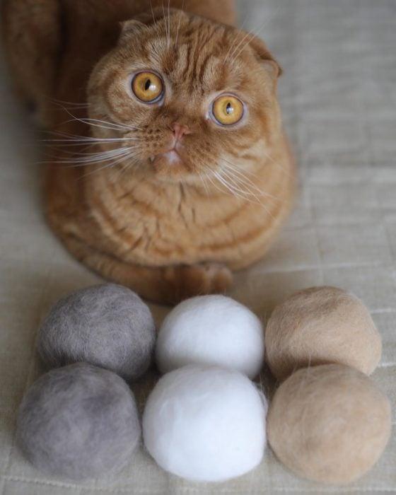 Gato frente a las bolas de pelo