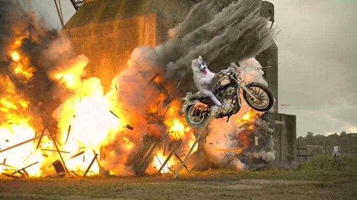 Batalla Photoshop - Husky escapando de explosión